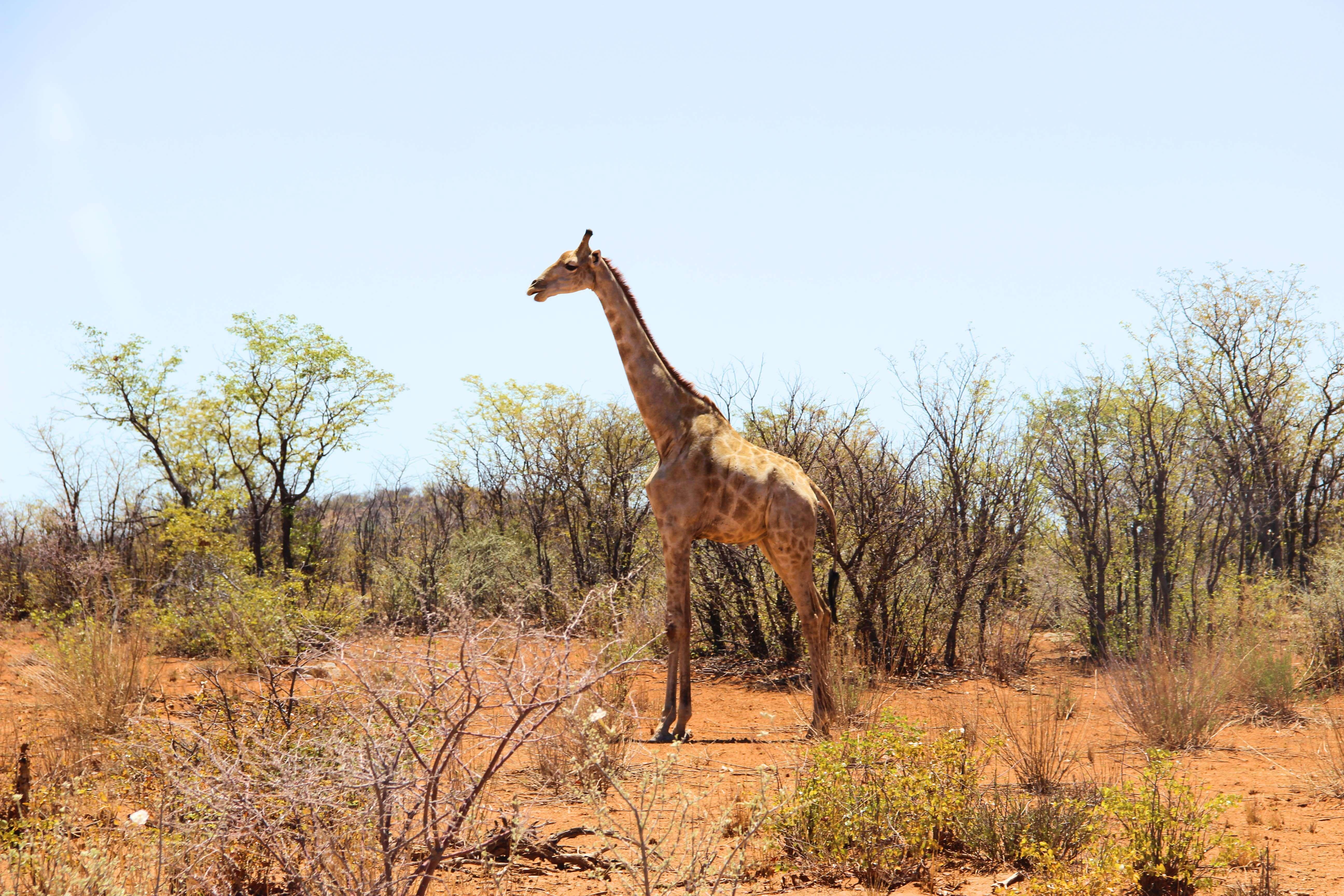 Weltreise_Backpacking_Namibia_Etosha
