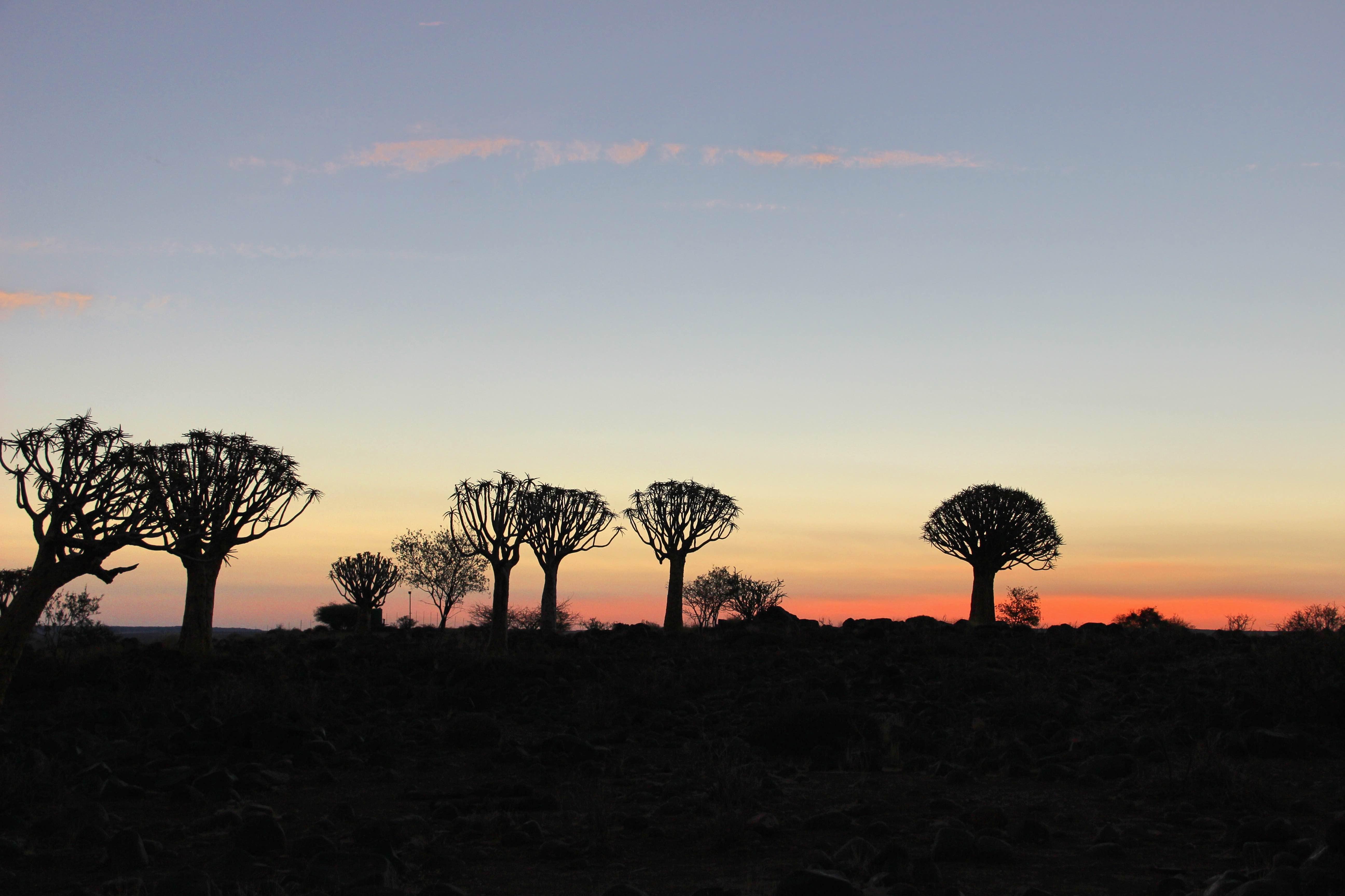 Weltreise_Backpacking_Namibia_Keetmanshoop_Köcherbaum