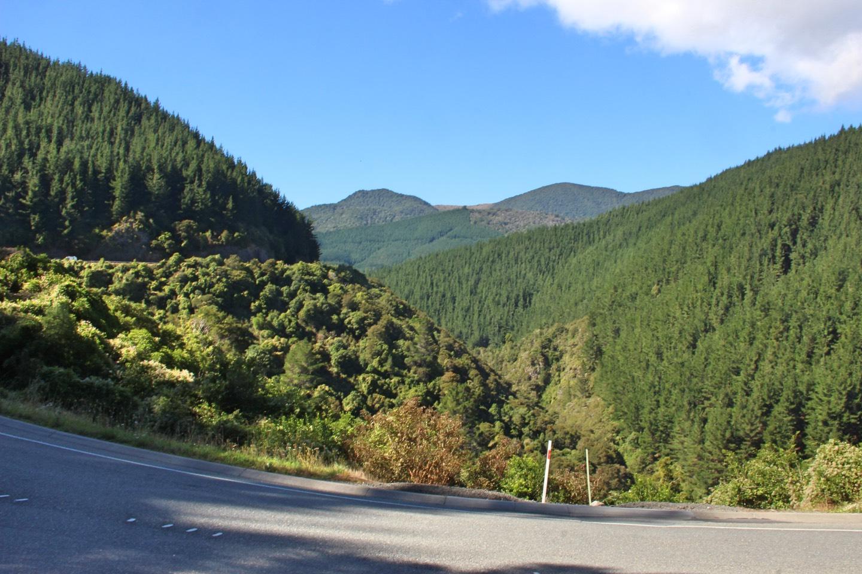 Weltreise_Backpacking_Neuseeland_Picton