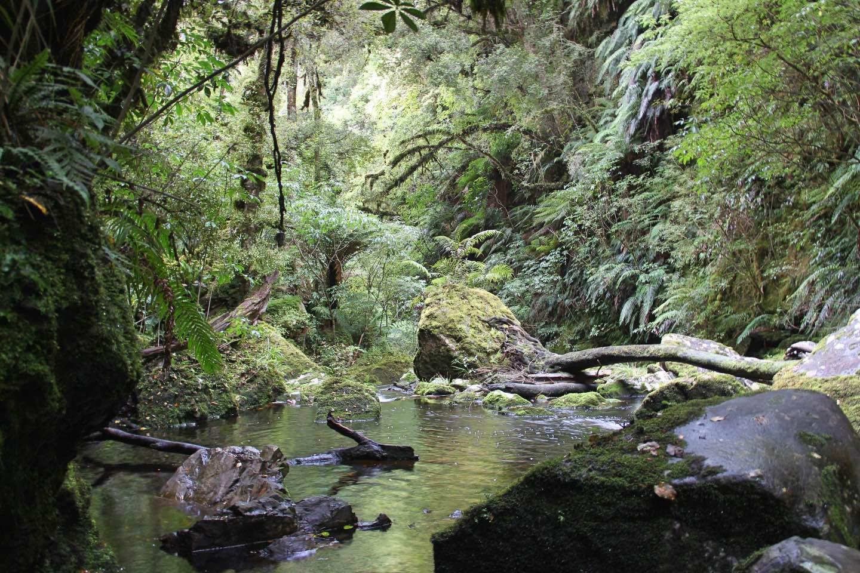 Weltreise_Backpacking_Neuseeland_Mataifalls